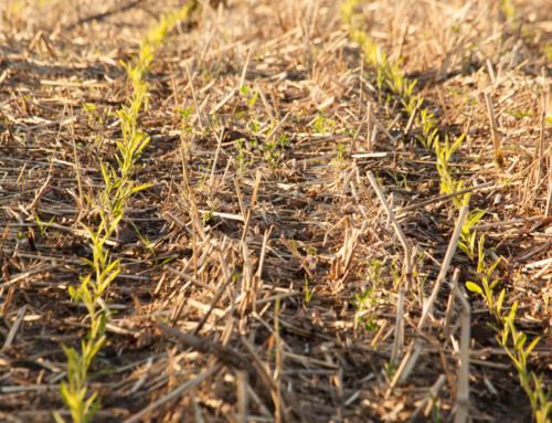Carbon is the new crop for land managers